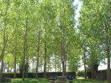 Peaceful rest area near Villarmentero de Campos