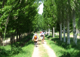 Another tree lined walkway... sorry, but I love them!