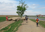 Sharing the camino with a shepherd and his flock