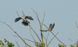 Cuckoo's, Gunners Park, Shoeburyness.