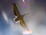 white pelican sun bright_MG_8856.jpg