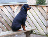 sasha on the lookout