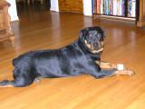 sasha  and her bone