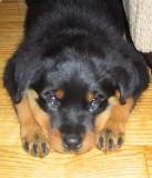 sophie 10 weeks old