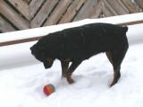 sasha at play