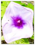 PurpleFlower1.jpg
