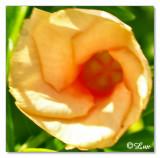 YellowFlower1.jpg