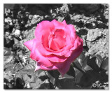 Photoshop-Color Masking.jpg