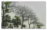 Select Green-Trees.jpg