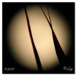 Moon through palm leaf