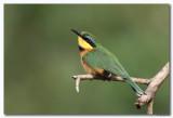 Vogels in Kenia