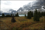 BOW LAKE VIEW, BANFF N.P.