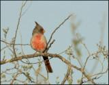 ARIZONA BIRDS  2007