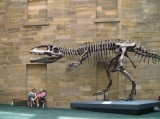 In the Australian Museum