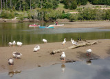 Canoes going, birds watching