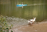 One canoe, two geese