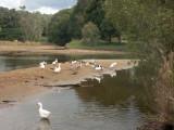 Canoes gone, birds back
