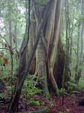 Tree butt, Boorganna