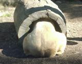 Bear Behind