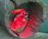 Meerkat enjoying a Sunlamp