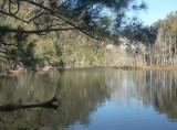 Scenic Forest Walk to Mummuga Lake