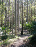 Scenic Forest Walk – Regrowth