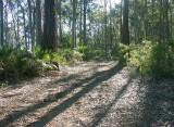 Bodalla State Forest – 1