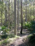 Bodalla State Forest  – 2