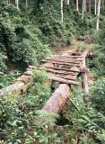 Old timber tramway