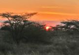 A firey Amboseli sunset.jpg