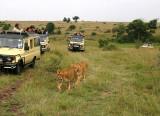 Mara Lionesses and vans.jpg
