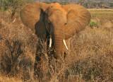 Dusty angry elephant.jpg