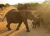 Dusty Elephants.jpg