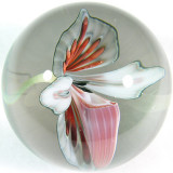 Lady Slipper Orchid  Size: 1.64  Price: SOLD