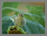 BIRDS 2007