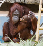 Bess and her baby, Kasih