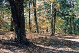 05_woods.JPG