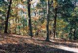 06_woods.JPG