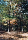 07_woods.JPG