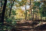 10_woods.JPG