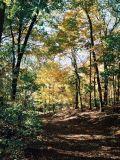 11_woods.jpg
