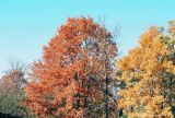 06_Neighbors_trees.jpg