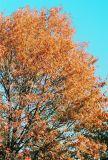 16_tree.jpg