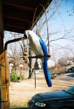 parrot_with_malibu.jpg