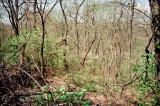 05_woods_behind.jpg