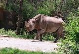 03_black_rhino.jpg