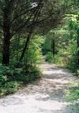 07_trail.jpg