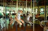 07_carousel_cats.jpg