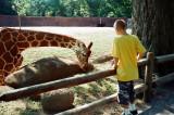 11_giraffe_a.jpg
