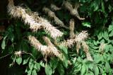 16_plantings.jpg